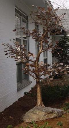 Кованое дерево с листвой для участка в Херсоне на заказ. купить стоимость цена